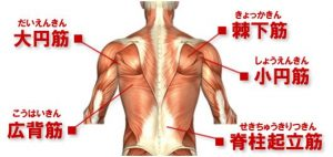 musclechart-back
