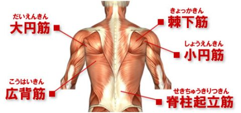 back-muscle-map
