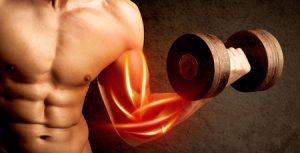 52090310 - fit bodybuilder lifting weight with red muscle concept on background